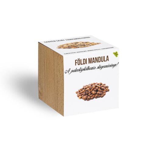 Földimandula - Tigrismogyoró - növényem fa kaspóban